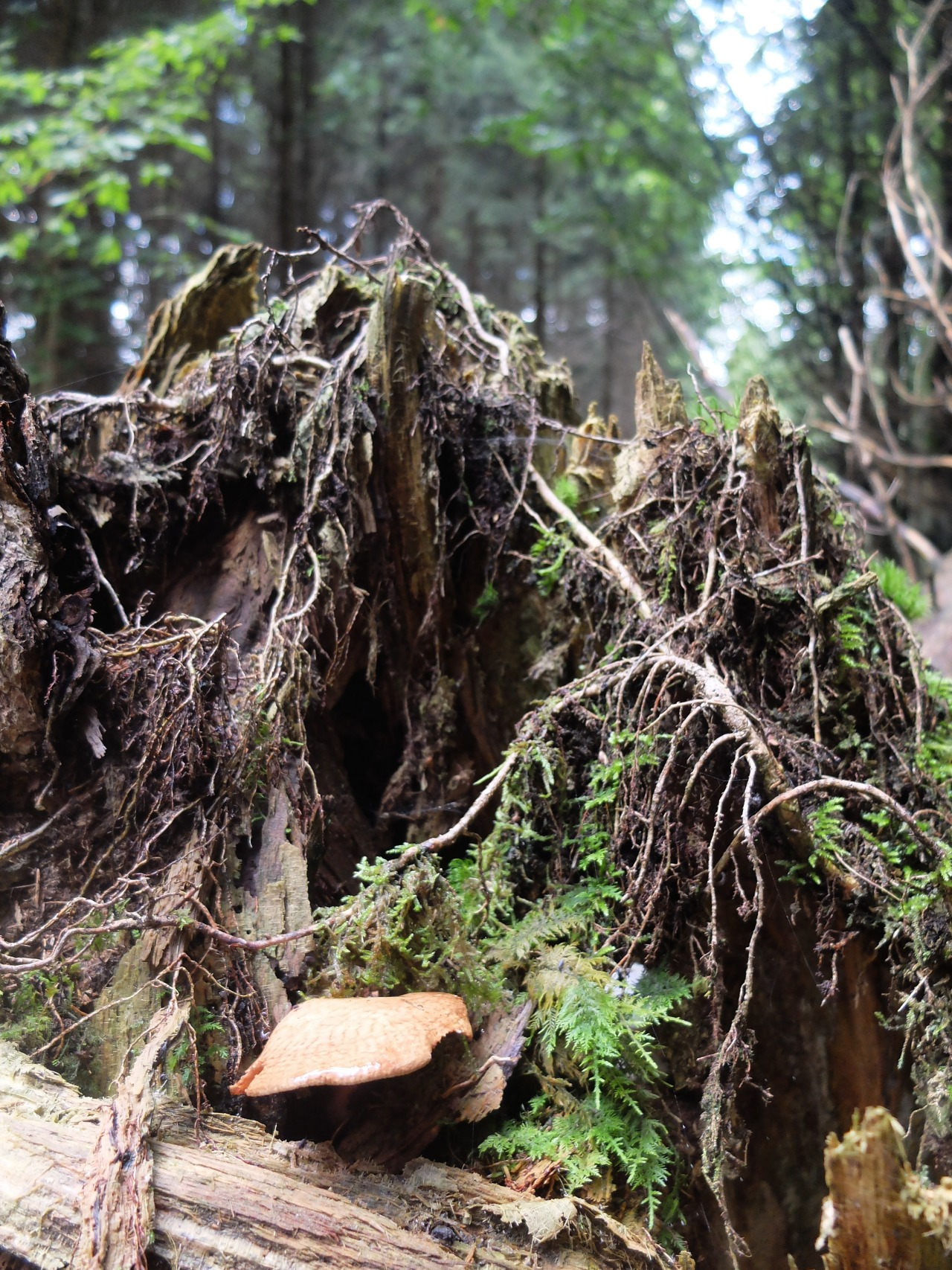 mangia minga // 'In den Schwammerln: foraging mushrooms in the Kruezlinger forest'