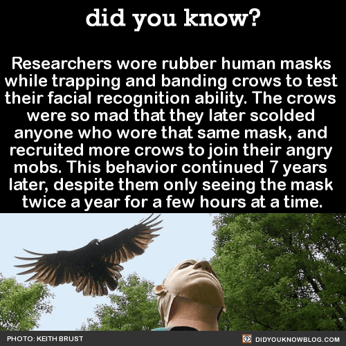 Researchers wore rubber human masks while trapping and banding crows to test their facial recognition ability. The crows were so mad that they later scolded anyone who wore that same mask, and recruited more crows to join their angry mobs. This behavior continued 7 years later, despite them only seeing the mask twice a year for a few hours at a time. Source