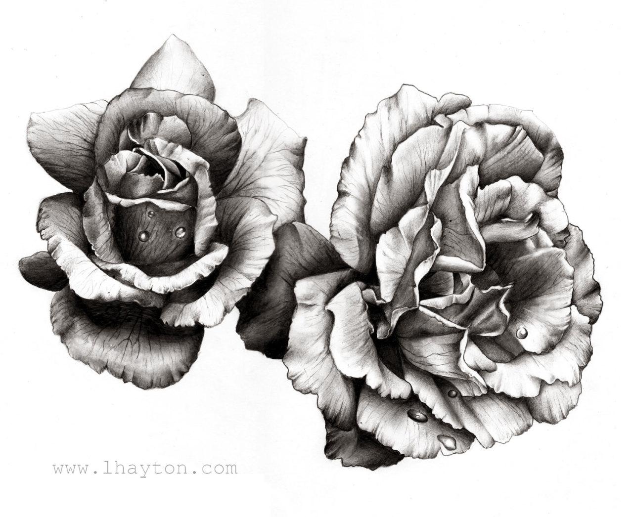 hoontoidly roses tumblr drawing