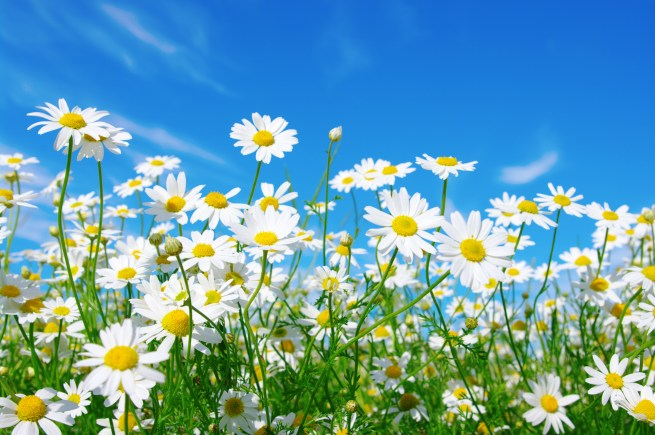 Come-On-Get-Happy-Improve-Your-Mood-With-Flowers-Bellevue-Washington