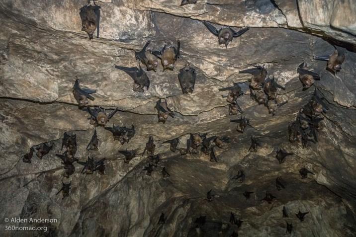 Bats in Kamikaze tunnel 3