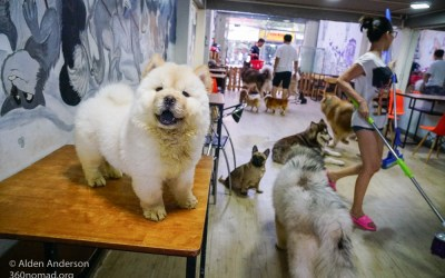 Dog Cafes, Cat Cafes, and Pet Cafes — Ho Chi Minh City