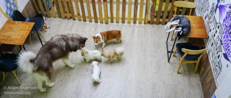 Yuna Alaska - Dog & Cat Cafe