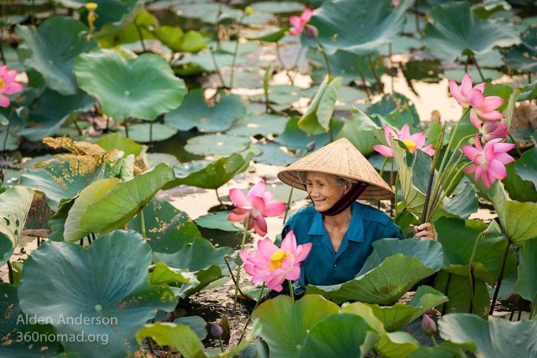 Ba, harvesting Lotus, Hoi An, Vietnam