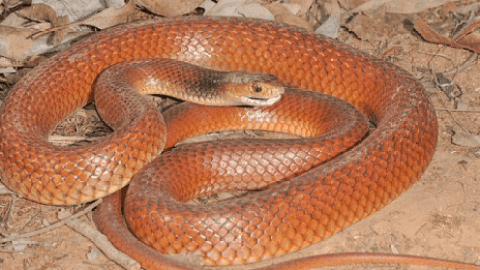 Top 5 Most Poisonous & Dangerous Snakes On Earth