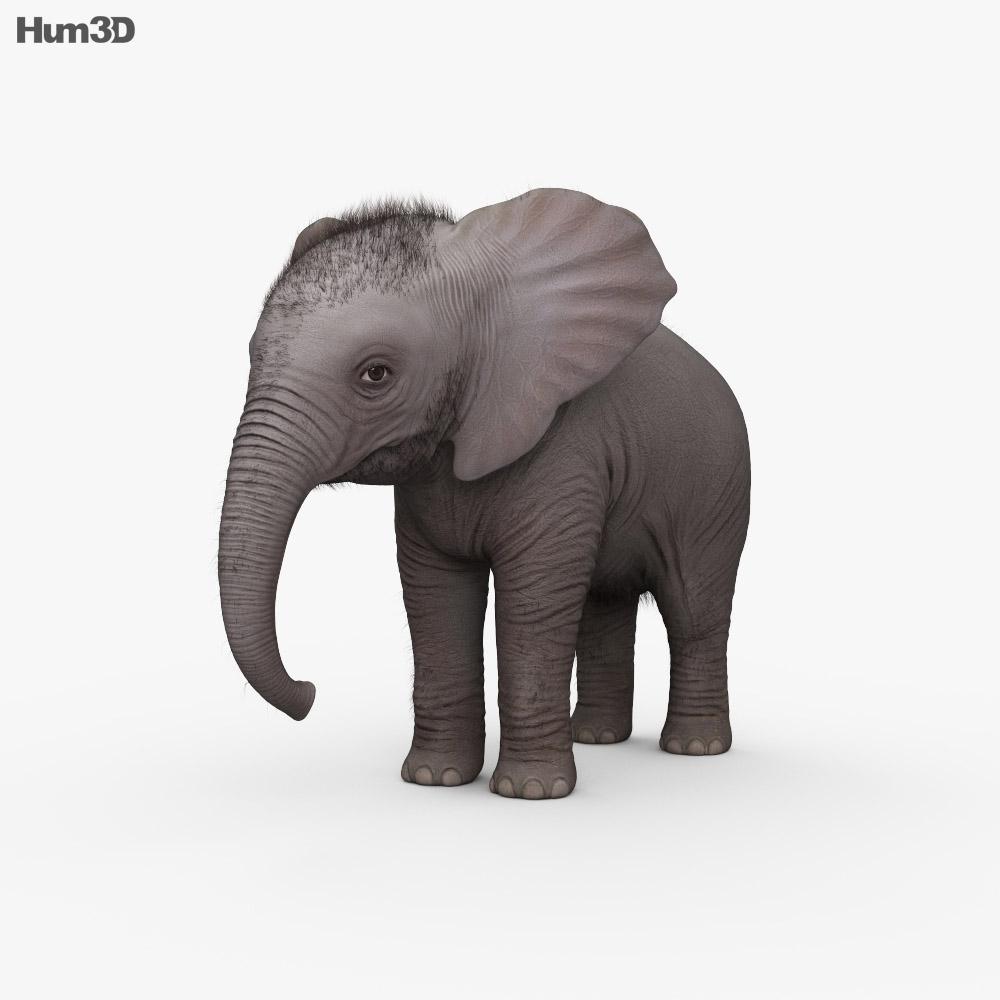 Baby Elephant Hd 3d Model Animals On Hum3d