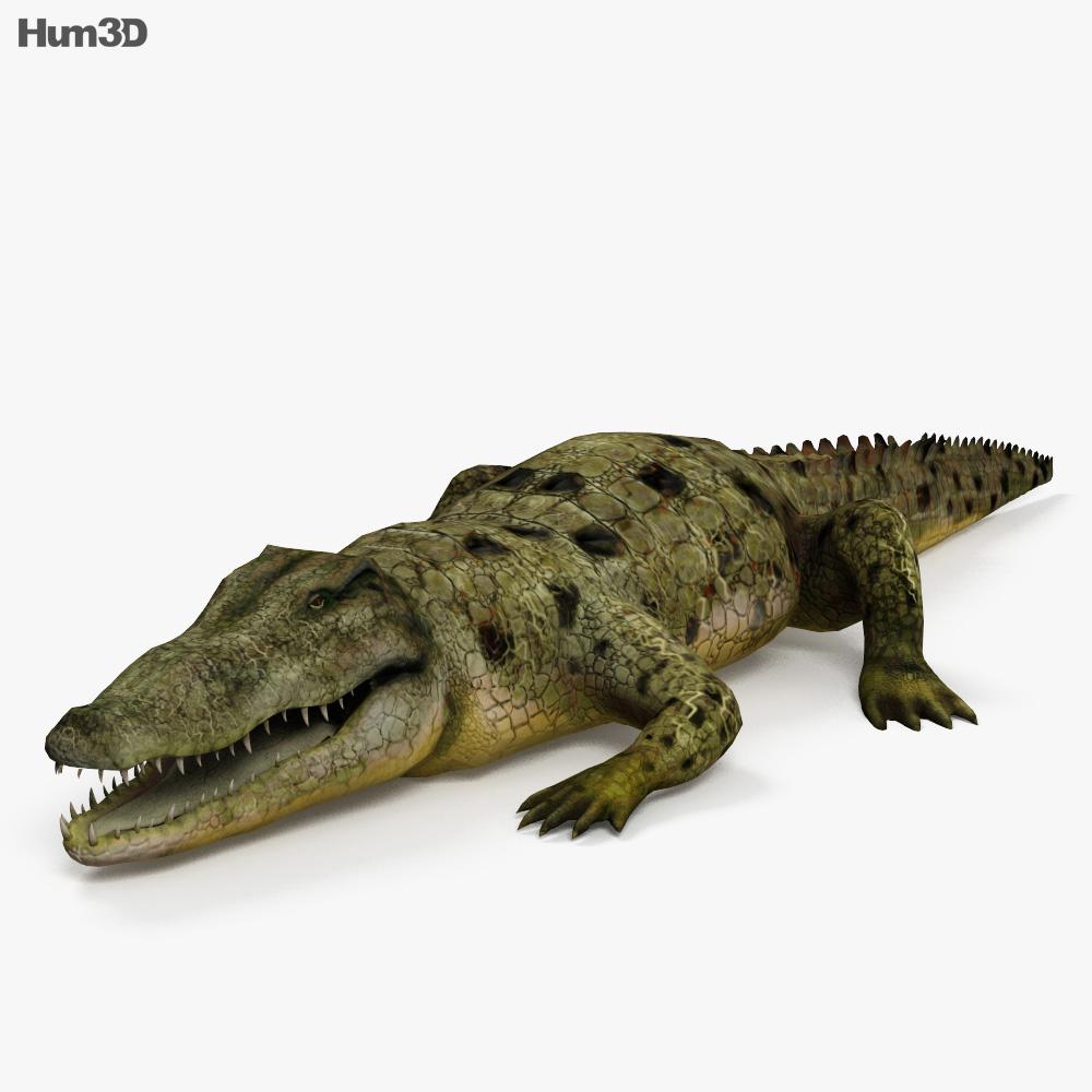 common crocodile hd 3d