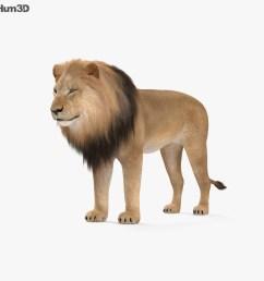 liones clipart [ 1000 x 870 Pixel ]