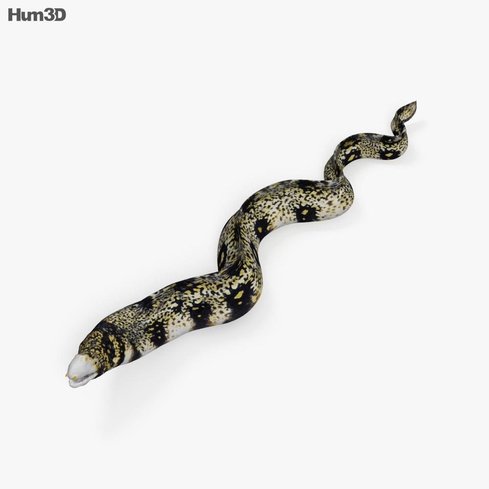 hight resolution of moray eel hd 3d model