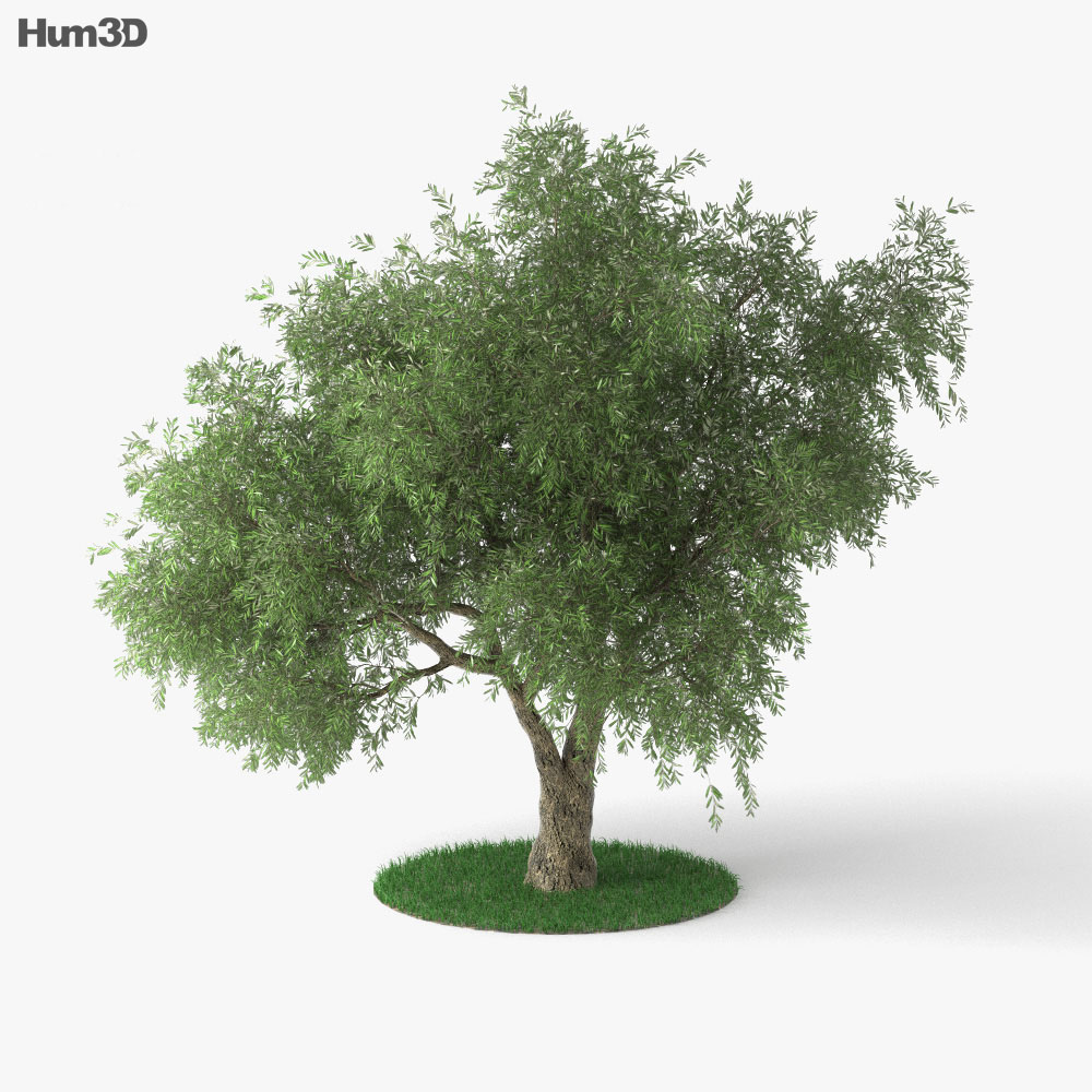 Olive Tree 3d Model Plants On Hum3d