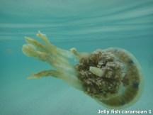 Jelly Fish at Caramoan