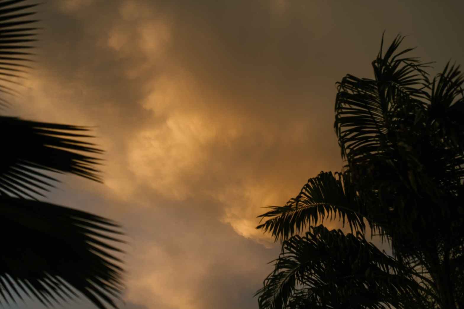palm leaves against sunset sky