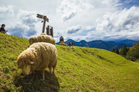 la trop ferme des moutmout dans des paysages suisse
