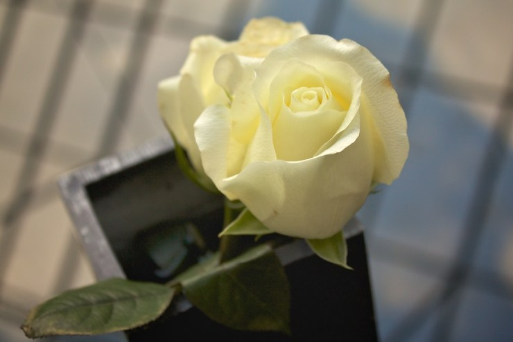 Il design dei fiori (1)