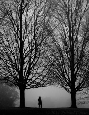 November Walk