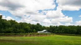 North Carolina Rocky  River Vineyards