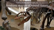 Fernbank Museum of Natural History - Enjoy both inside AND out