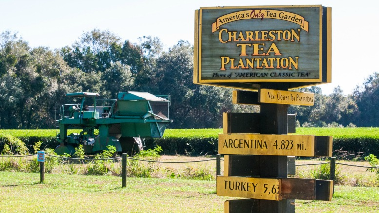 charleston-tea-plantation