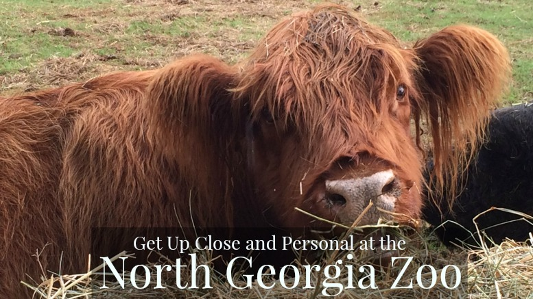 North Georgia Zoo