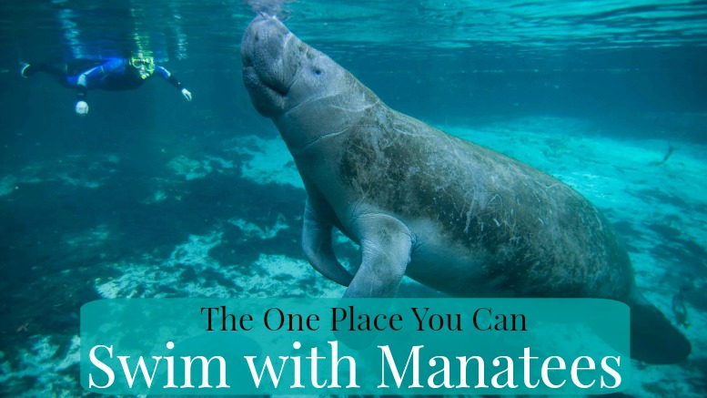 Swim with Manatees Crystal River FL