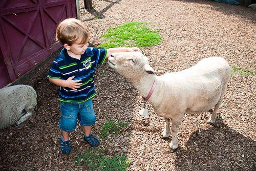 Day 75 - Tanglewood Farm 0 ideas from 365 Atlanta Family