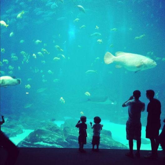 Spring break at Georgia Aquarium - ideas from 365 Atlanta Family