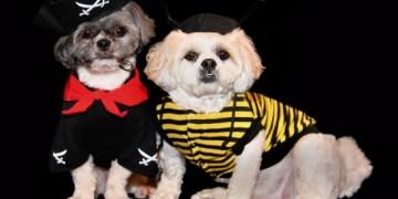 Barrington Dressed up Dogs