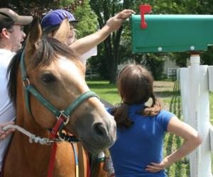 "292. Meet ""Taco"" – Barrington's Award Winning Horse"