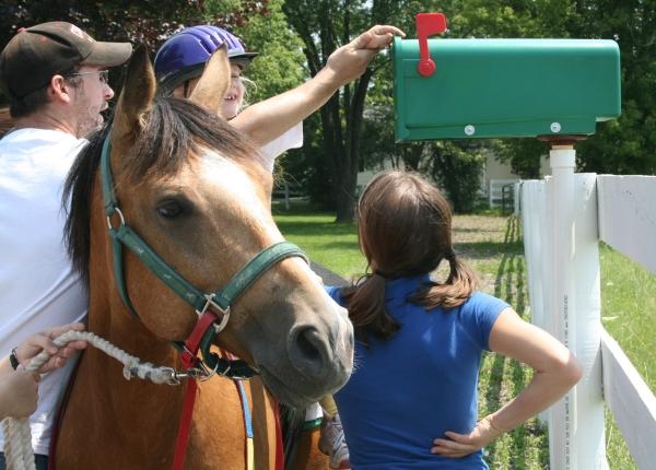 Taco the Award Winning Horse at Walk On Farm