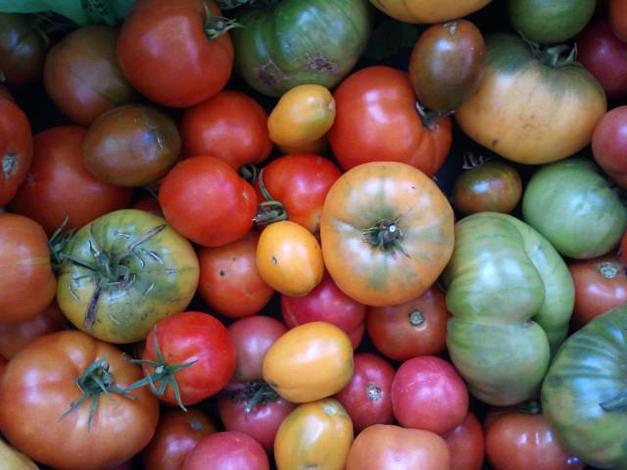 Smart Farm Tomatoes, 2012 - Courtesy of Smart Farm