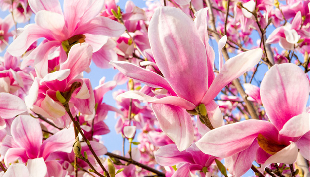 Spring Flowers in Barrington - Courtesy of Anthony Tortoriello/Atort Photography