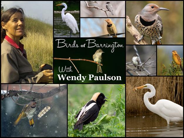 Free Barrington Area Bird Walks this Fall