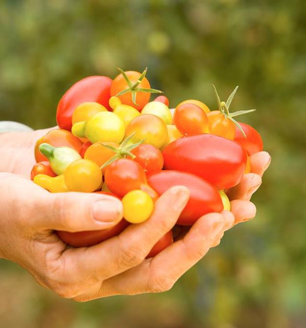 September's Barrington 220 Tasty Tuesday Ingredient:  Grape Tomatoes