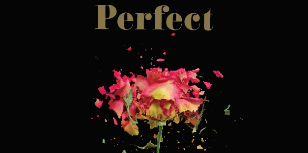 The Novel Perfect by Author Rachel Joyce