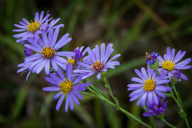 Post - Citizens for Conservation - Native Plant, Shrub, Tree Sale - 1