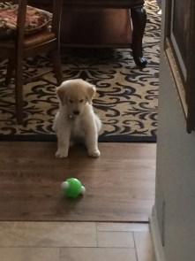 Hudson: Submitted by Amy Holsworth