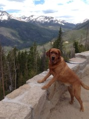 Lucy: Submitted by Karen Wexler