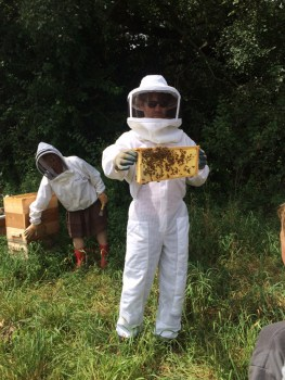 Post - The Gentleman Farmer - Honey Harvest - 4