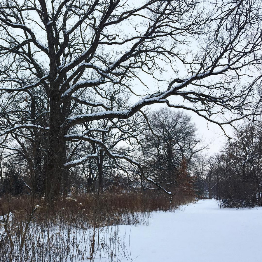 NoonDaily - Bakers Lake in the Snow