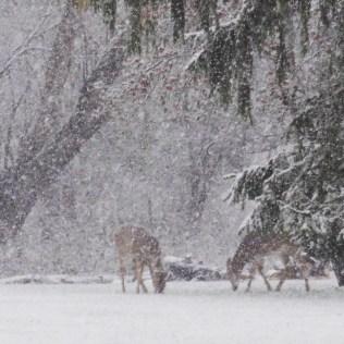 Winter Visitors - Carla Bank Art