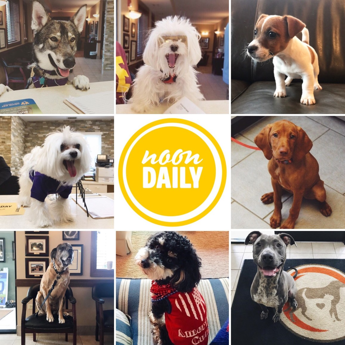 NoonDaily - Canines of Barrington Animal Hospital
