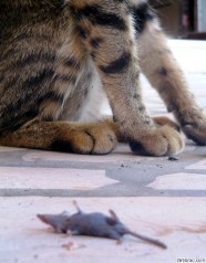 Mouse for lunch
