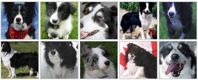 Public Datasets for Machine Learning: Dog Breed Identification Dataset