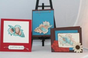 Sea Shell Card Collection