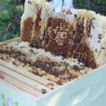 Honey Collecting & a Honey Recipe Round Up
