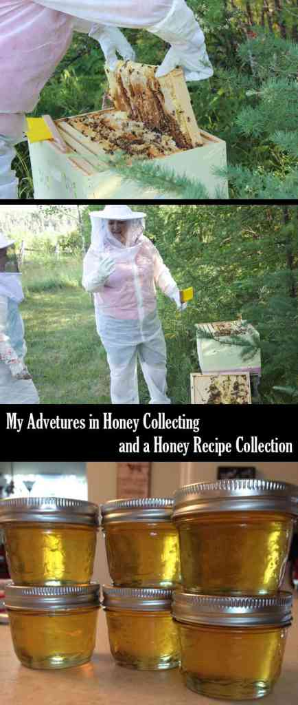 Honey collecting in Northern Ontario and a round up for honey recipes