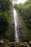 Manoa Falls. So beautiful!