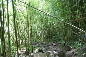 The beginning of the hike was almost all bamboo forrest. It was beautiful.