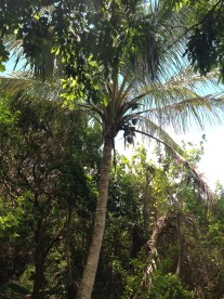 Random palm tree in the middle of the woods.