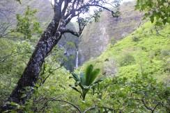 Hanakapi'ai Falls Trail 45